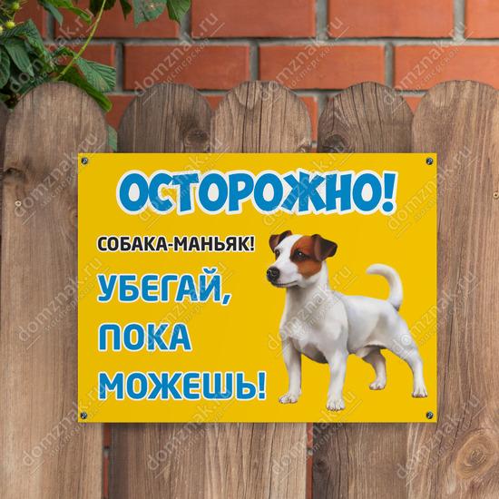 Табличка собака-маньяк джек рассел терьер